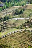 Longji rice terraces — Stock Photo