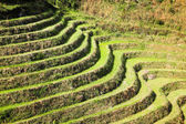 Terraced field lines — Stock Photo