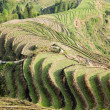 Terraced fields scenery — Stock Photo