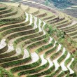 Terraces in springtime — Stock Photo