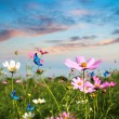 Butterflies flying in the flowers — Stock Photo #16165907