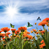Yellow daisy with butterflies — Foto Stock