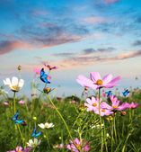 Butterflies flying in the flowers — Stockfoto