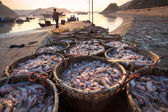 Fishery harbor in morning — Stock Photo