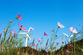 Flower and wind turbines — Stock Photo