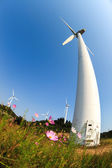 Wind power with beautiful coreopsis flower — Foto de Stock