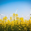Wind farm and yellow rapeseed flower in bloom — Stock Photo