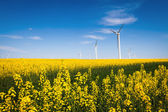 Wind farm and rapeseed flower — Stock Photo