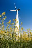 Wind turbines in rapeseed field — Stock Photo
