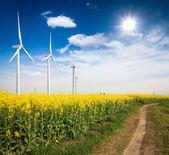 Campo de colza con turbinas de viento — Foto de Stock