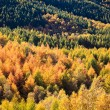 Stock Photo: Forest in autumn colors