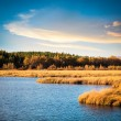 Wetland park in autumn — Stock Photo