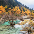Stock Photo: Calcification ponds in autumn forest
