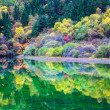 Profusion of autumn color on the lake — Stock Photo
