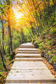 Wooden footway in colorful autumn — Stock Photo