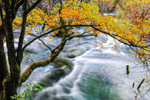 Autumn tree and flowing creek — Stock Photo