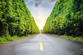 Road and tree — Stock Photo