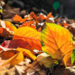 Fallen leaves closeup — Stock Photo