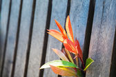Bright red young leaves in spring — Stock Photo