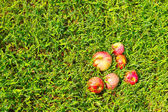 Apples on the green grassy — Stock Photo