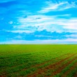 Stock Photo: Solar field
