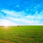 Solar field — Stock Photo