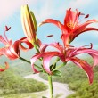 Flower lily — Stock Photo