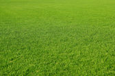 Grassy — Stock Photo