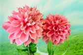 Summer flora — Stock Photo