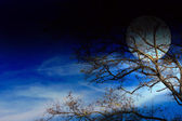 Dark sky and tree — Stock Photo