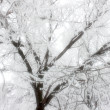 Ice on branch — Stock Photo #38290113