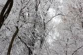 Eis auf einem Zweig — Stockfoto