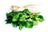 Leaves mint — Stock Photo