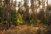 Autumn forest — Foto de Stock