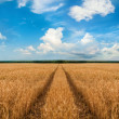 Road through wheat field - Stockfoto