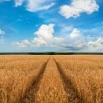 Road through wheat field — Stock Photo