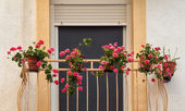 Balcony with flowers — Stock fotografie