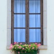 Windows with flowers — Stock Photo #48434183