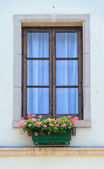 Windows with flowers — Stock fotografie