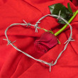 Rose and barbed wire — Stock Photo #44013829