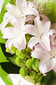 Pale pink lilies — Stock Photo