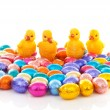 Colorful easter eggs and chickens - Stock Photo