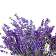 Stock Photo: Bouquet of picked lavende