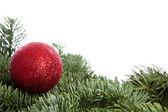 Красный елочный шар на сосне — Стоковое фото