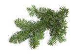 Holé zelené oškubané vánoční větvička bílé pozadí — Stock fotografie