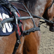 Stock Photo: Horse equipment