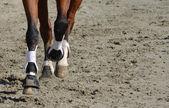 Piernas del caballo — Foto de Stock
