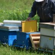 Stock Photo: Beekeeper with new honey comb