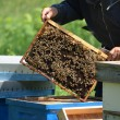 Stock Photo: Beekeeper with honey comb