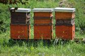 Beehives — Stock Photo